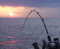 The research project focuses on seven species that either have already invaded the Great Lakes or are threatening to do so, potentially devastating the regional commercial and recreational fishing industries